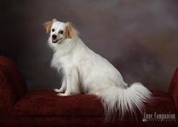Pet portraits near Newport News Va
