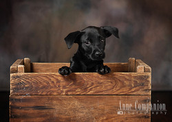 Dog photographer Hampton Va