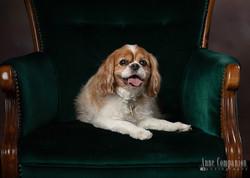 Pet photographer Hampton Roads Va