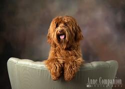 Dog photographer Hampton Roads Va