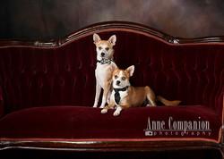Dog portraits Hampton Roads Va