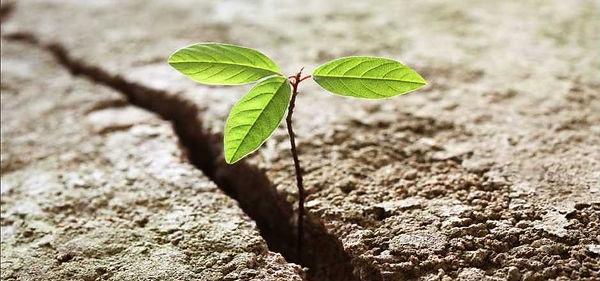 Aufbruch Pflanze.jpg