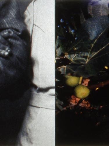 #5 Stillness (figs)