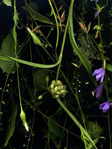 Noctural Botanical Ontario