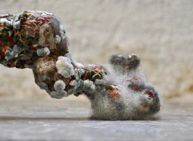 Living Sculpture - Cassius Benham