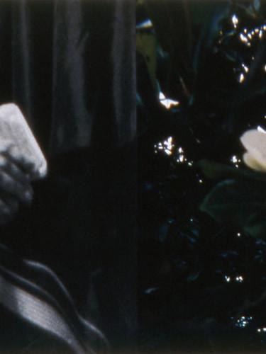 #1 Stillness (magnolia #1)