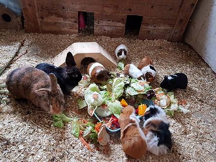 Kaninchen2.jpg