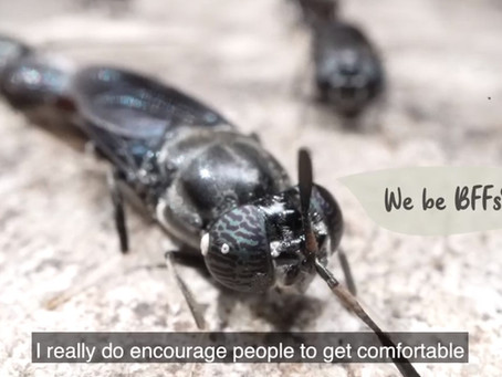 BSFs, our BFFs! Insectta Feature by Ministry of Sustainability and the Environment ·