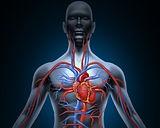 venas-y-arterias-54n.jpg