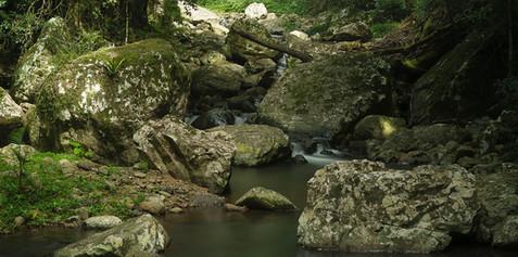 Springbrook Stream