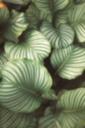Green Leaves_edited.jpg