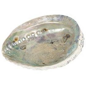 Large Abalone Shell 17-18cm