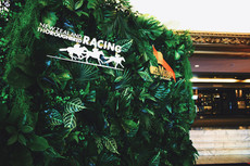 Racing tropical wall