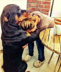 Can My Dog Really Sense My Emotions?