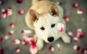 Dog Lovers Valentines Day