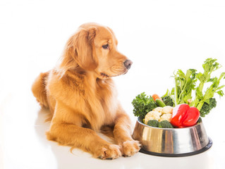 What is your dog eating?