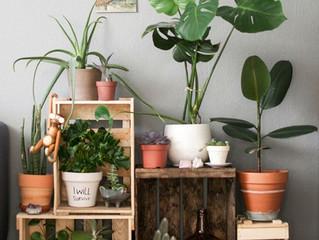 Conheça os benefícios e plantas ideais para o seu apartamento!