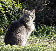 Feral Cat outside. Learn How to TNR.