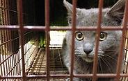 Feral Cat in a trap. Donate a trap.
