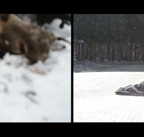 """動画作品のキャプチャー  作品《閃光と落下傘》遠藤薫 、2020年提供:青森公立大学 国際芸術センター青森(ACAC) Art works: """"Flash and Parachute""""  ENDO Kaori, 2020, old cloth  Courtesy of: Aomori Contemporary Art Centre (ACAC), Aomori Public University  グループ展『いのちの裂け目ー布が描き出す近代、青森から』展 (青森公立大 国際芸術センター青森)、2020 group show """"The Beginning of Life/ Art: Cloth Weaves Our Times, from Aomori"""" (Aomori Contemporary Art Centre, Aomori Public University)、2020"""