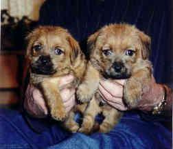 Kaylees Pups 01.jpg