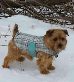 snow walk just Baden.jpg