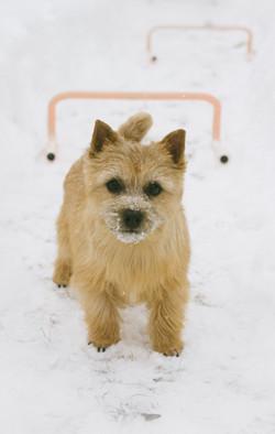 Kira in Snow