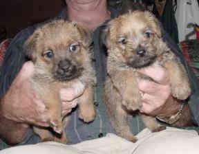 Cracker puppy 06.jpg