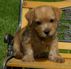Pup on Bench