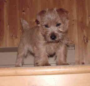 Keegan at Stairs 01.jpg