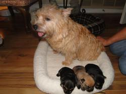 Jovi Puppies