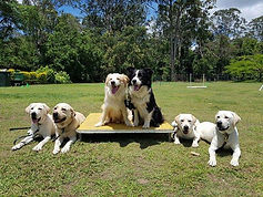 Proud team of trial training dog athletes!