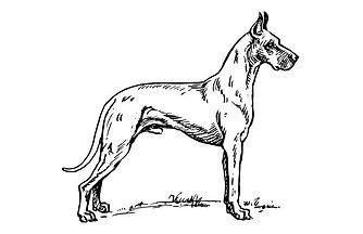 Great Dane sketch