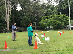 Handler and dog compete in Rally-O