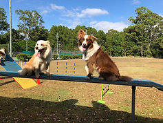 Working dogs pose on balance beam