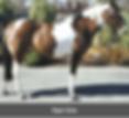 Screen Shot 2019-04-15 at 2.44.08 PM.png