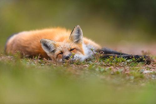 Les bases de la photographie animalière