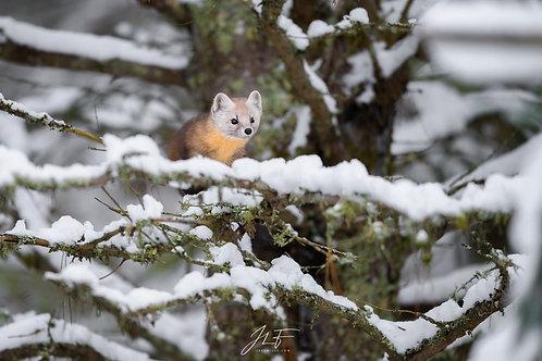 9 au 14 février 2022 - La faune de l'Ontario