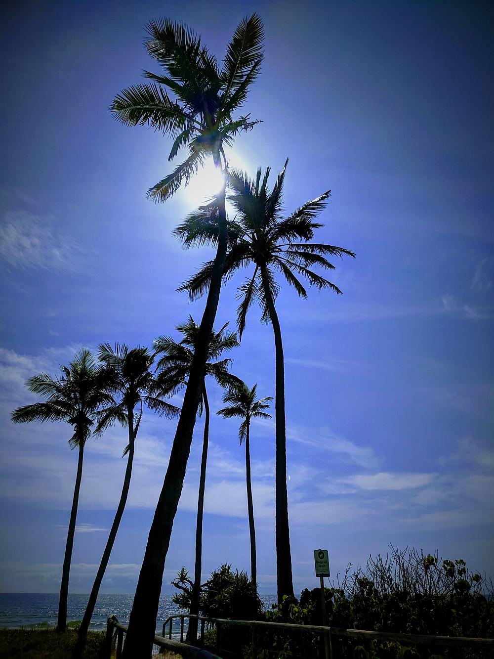 Palms at Sheraton Gold Coast © Copyright 2019 Bryan W Foster