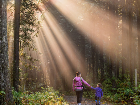 Take a walk in the forests with your kids