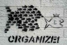 Organize!