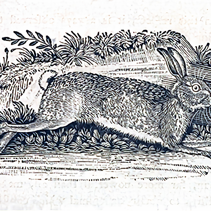Witches' Stags and Hares