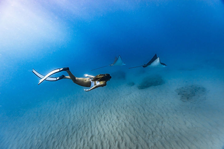 Woman free diving with two eagle rays swimming besides her - photo taken with iPhone inside a ProShotCase