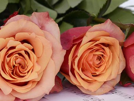 Rosa Poema