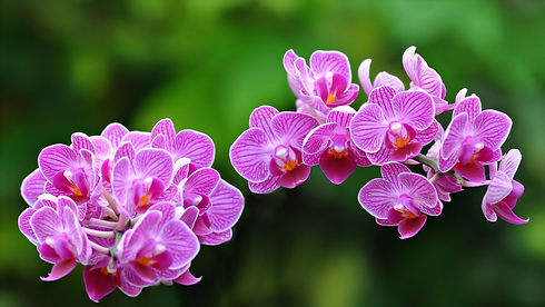 free-orchids-colors-exotic-flower-wallpa