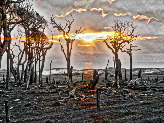 KOPI TREE SUNSET