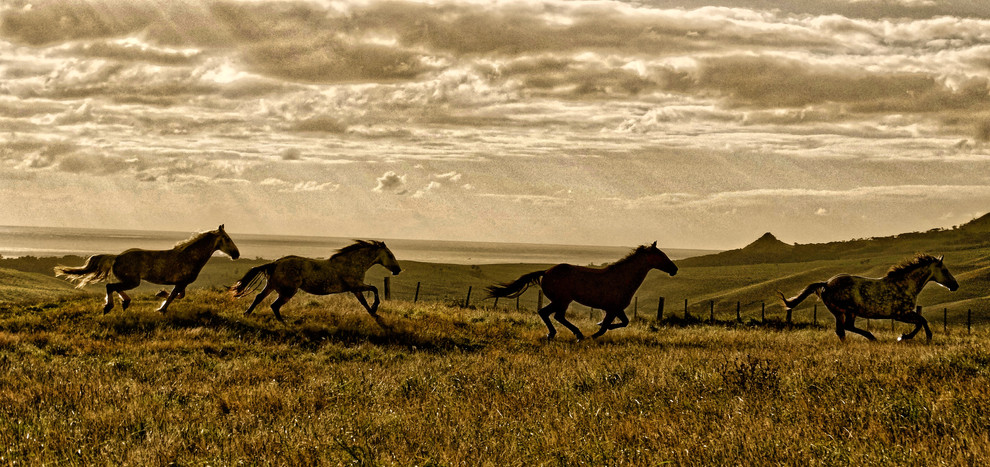 BLUFF HORSES