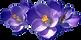 African Violets.png