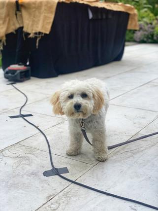 Fave Event Pet