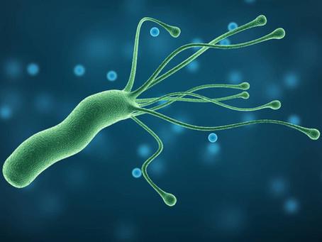 Avanzando hacia el diagnóstico de microorganismos de crecimiento exigente: Helicobacter pylori